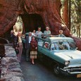 Photo:messynessychic.com What is it about large (OK, giant) trees that compels us to tunnel through their bases with our roads? It's not a new invention, certainly predating the automobile, and […]