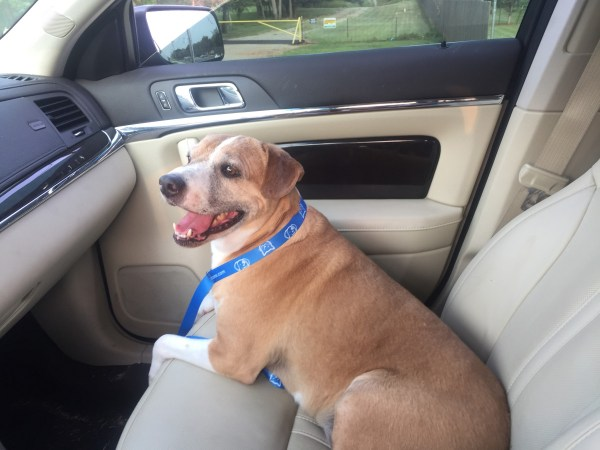 Honey the Dog in Lincoln MKS