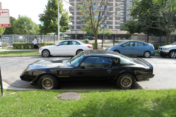 1981 Pontiac Firebird Trans Am, driver's side view