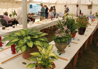 horticultural_show