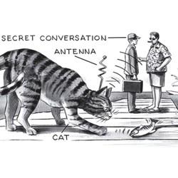 Opération « chaton acoustique » :  des chats dressés pour espionner les soviétiques