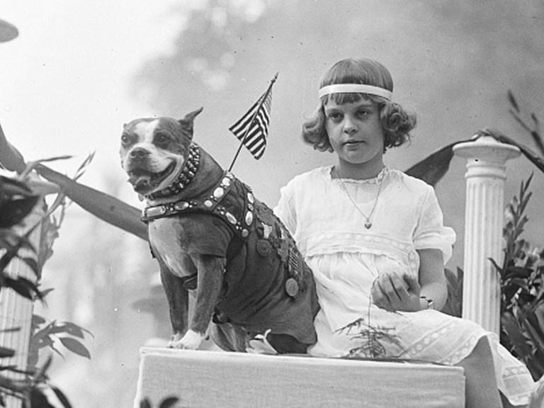 Sergent Stubby: le chien le plus décoré de la Première Guerre mondiale