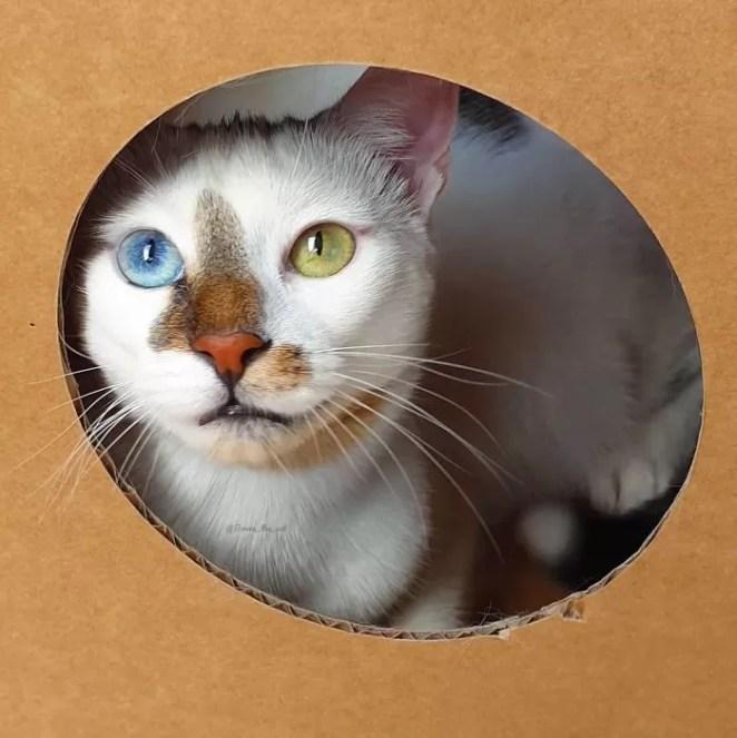 lindo gatinho