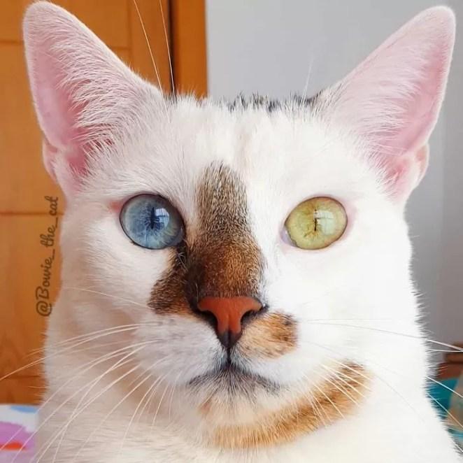 Conheça o gato de rua que foi adotado e viralizou