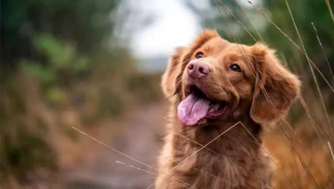 Sonhar com cachorro e as variações