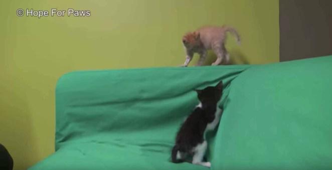 gatinho-resgatado