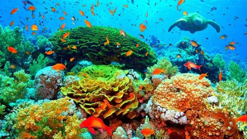 Protetor Solar x Recife de Corais