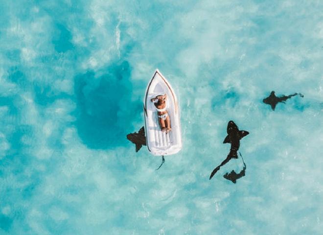 Ataque de Tubarão