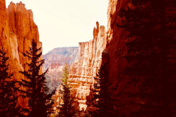 PARCHI, BRYCE