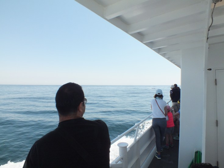 Whale Watch a Cape Cod