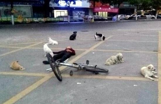 cani veglia padrone morto