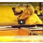 Video de una perrita melómana