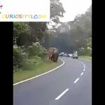 India: Un elefante mata a un hombre que intentó hacerle una foto (VÍDEO 18+)