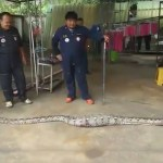 Vídeo: Una mujer siente una vibración en el suelo de su casa y halla algo increíble