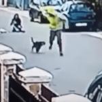 VÍDEO:  Un perro salva a una mujer de un robo mordiendo al ladrón en los glúteos