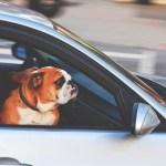 VIDEO: Cansado de esperar, este perro decidió llamar la atención de su dueño