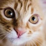Nace un singular gato en Sudáfrica (VÍDEO)