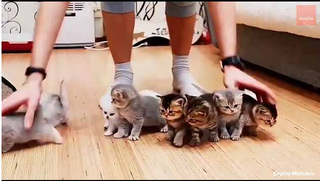 Vídeo de Recopilatorio. Mascotas cansadas de dueños.