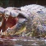 Un cocodrilo arrastra a un niño de cuatro años al fondo de una laguna en México