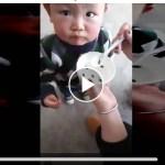 Alimenta a su hijo con renacuajos de rana.