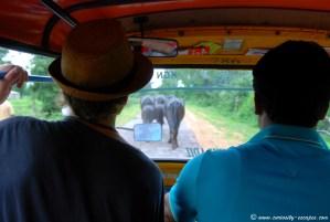 Vaches sur la route, virée en rickshaw, Inde