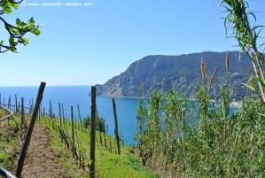 Des vignes qui donnent sur la mer