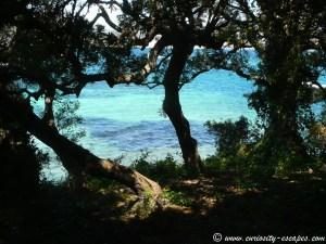 forêt île Ste Marguerite
