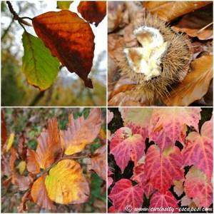 l'automne au lac d'Annecy