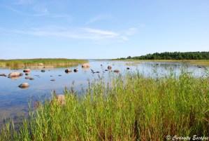 Parc National de Vilsandi sur l'île de Saaremaa