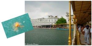 la mousson au temple d'Amritsar