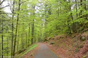 Sentier de randonnée aux chutes de Triberg