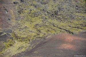 Mousse sur le volcan Eldfell
