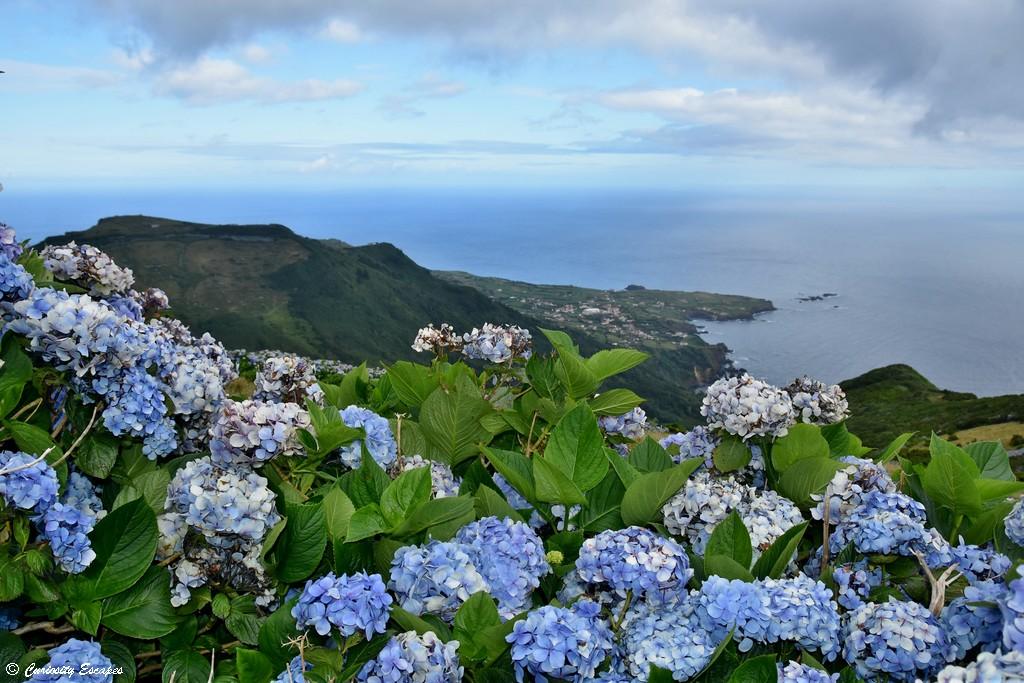 Côte fleurie de Flores, Açores