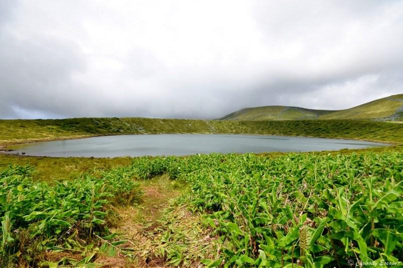 Laga Rasa de Flores, Açores