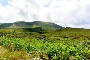 Végétation de Flores, Açores