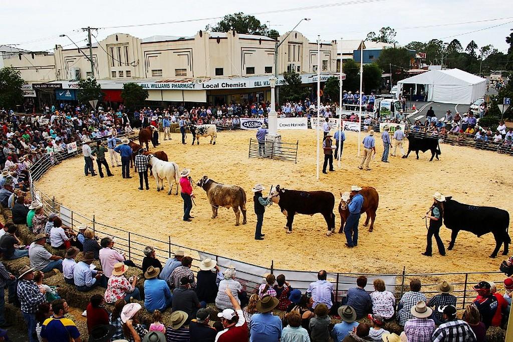 Défilé de vaches pendant Befef Week