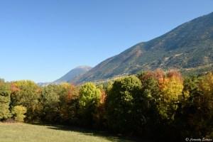Feuillage coloré d'automne