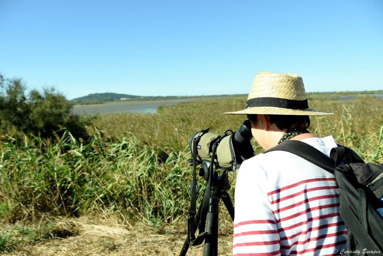 Observation des oiseaux dans la réserve du Bagnas