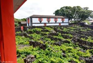Musée du vin de l'île de Pico