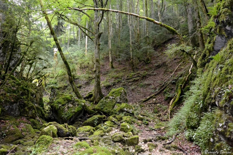 Forêt enchantée aux gorges du Nan