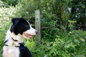 Visiter les ENS avec son chien