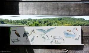 Oiseaux de l'étang de Lemps, Isère