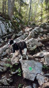 Randonnée Mont Baron avec un chien