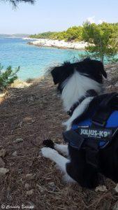 Se baigner avec son chien au Cap Kamenjak, Croatie