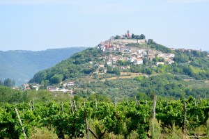 Vignes autour de Motovun, Croatie