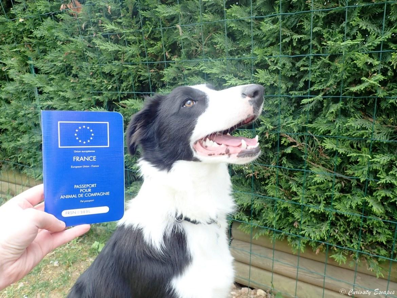 Passeport pour le chien voyageur