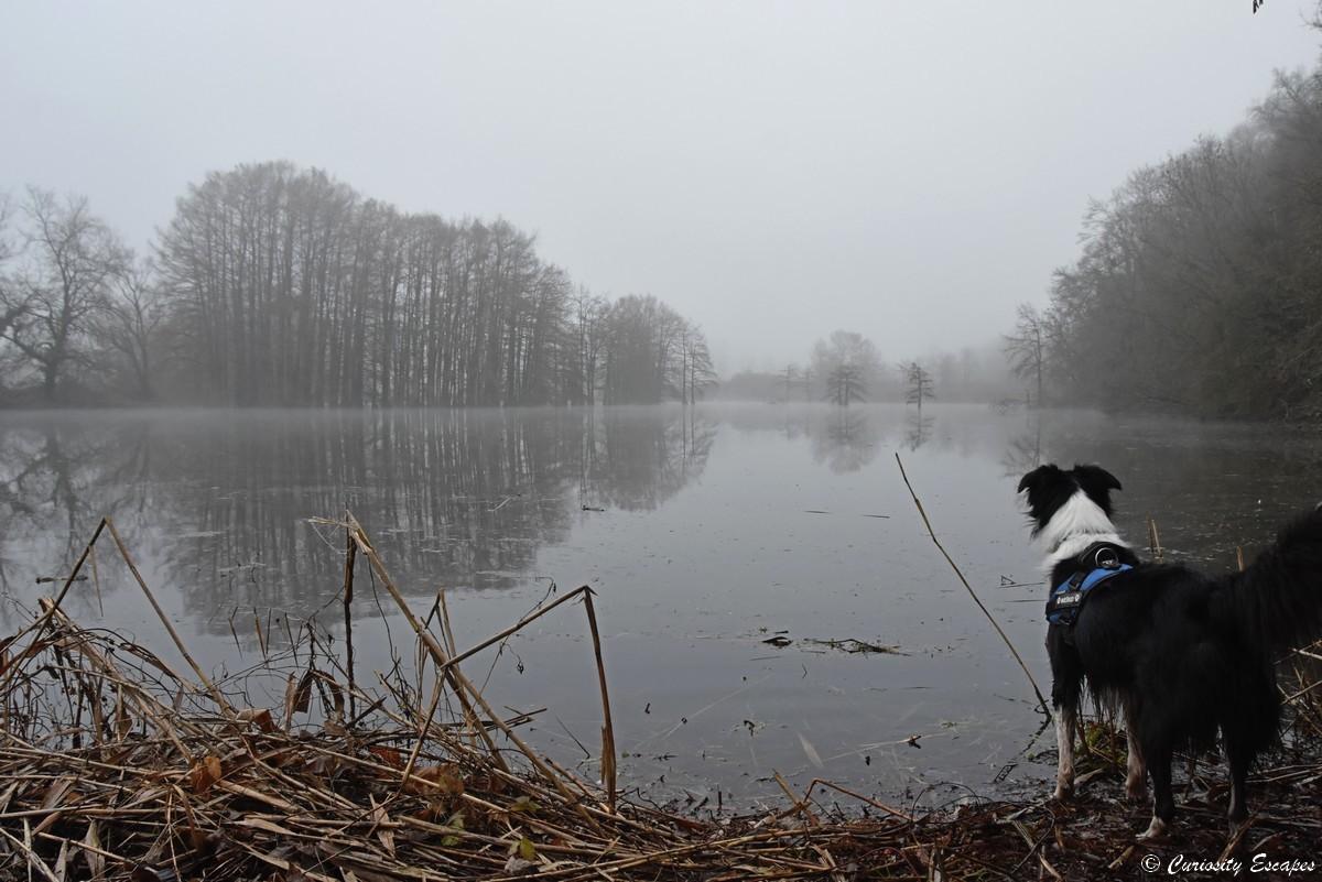 Etang di boulieu in inverno sotto la nebbia