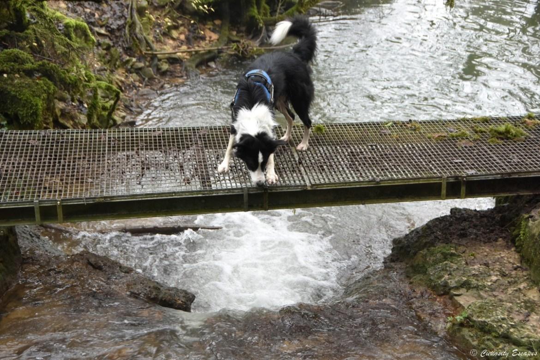 Passerelle de la cascade de la Roche, Isère