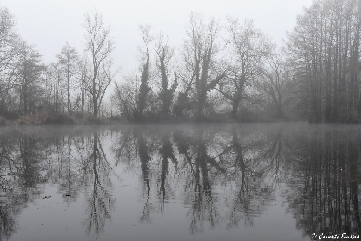 effetto specchio calvo cypress in inverno