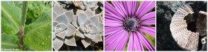 Faune et flore colorées des Açores